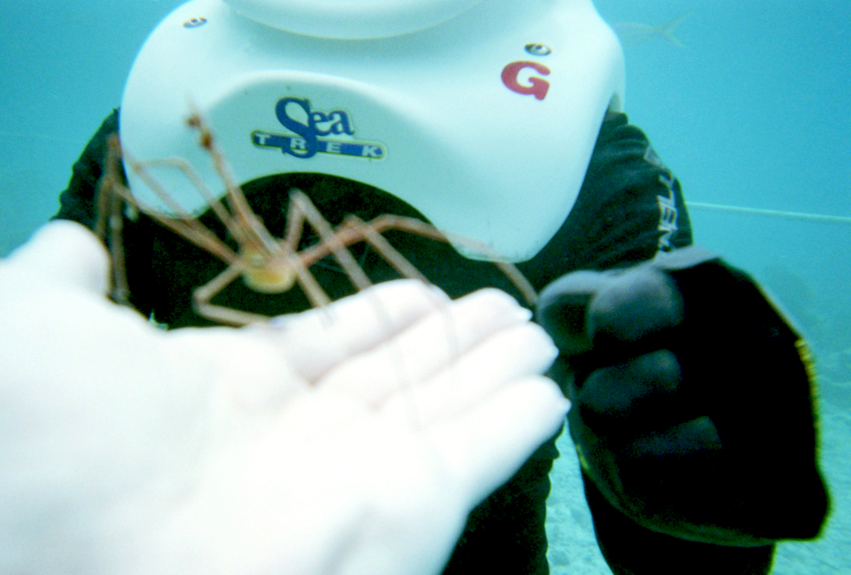 Sea creature you will see during sea trekking