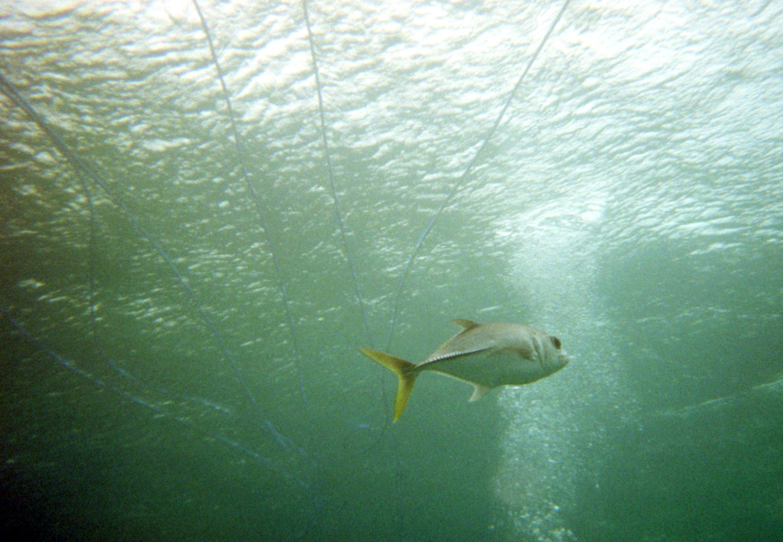 The fish you can sea when you do sea trekking