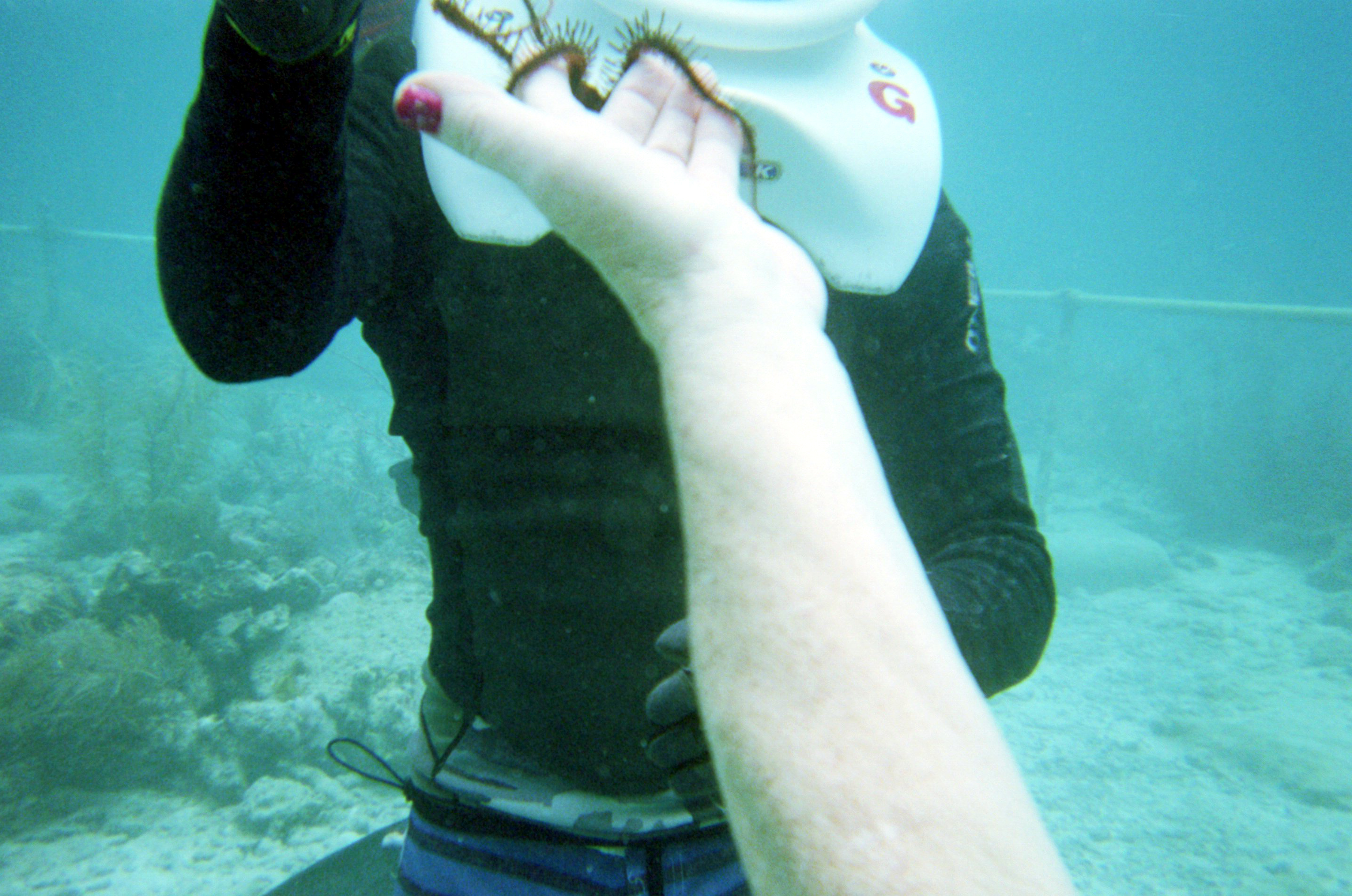 Sea creature you can touch in sea trekking