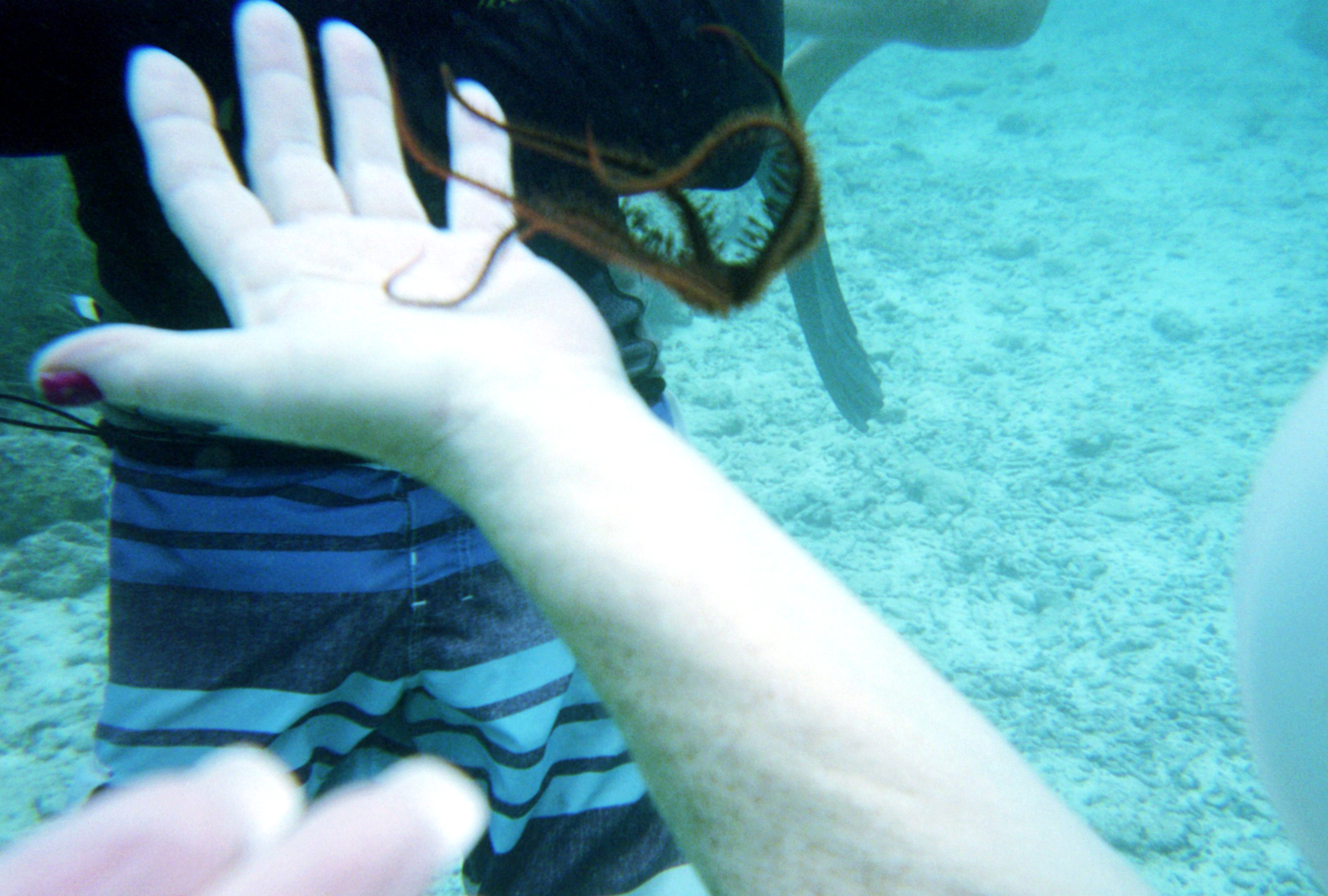 Sea life you can touch in sea trekking
