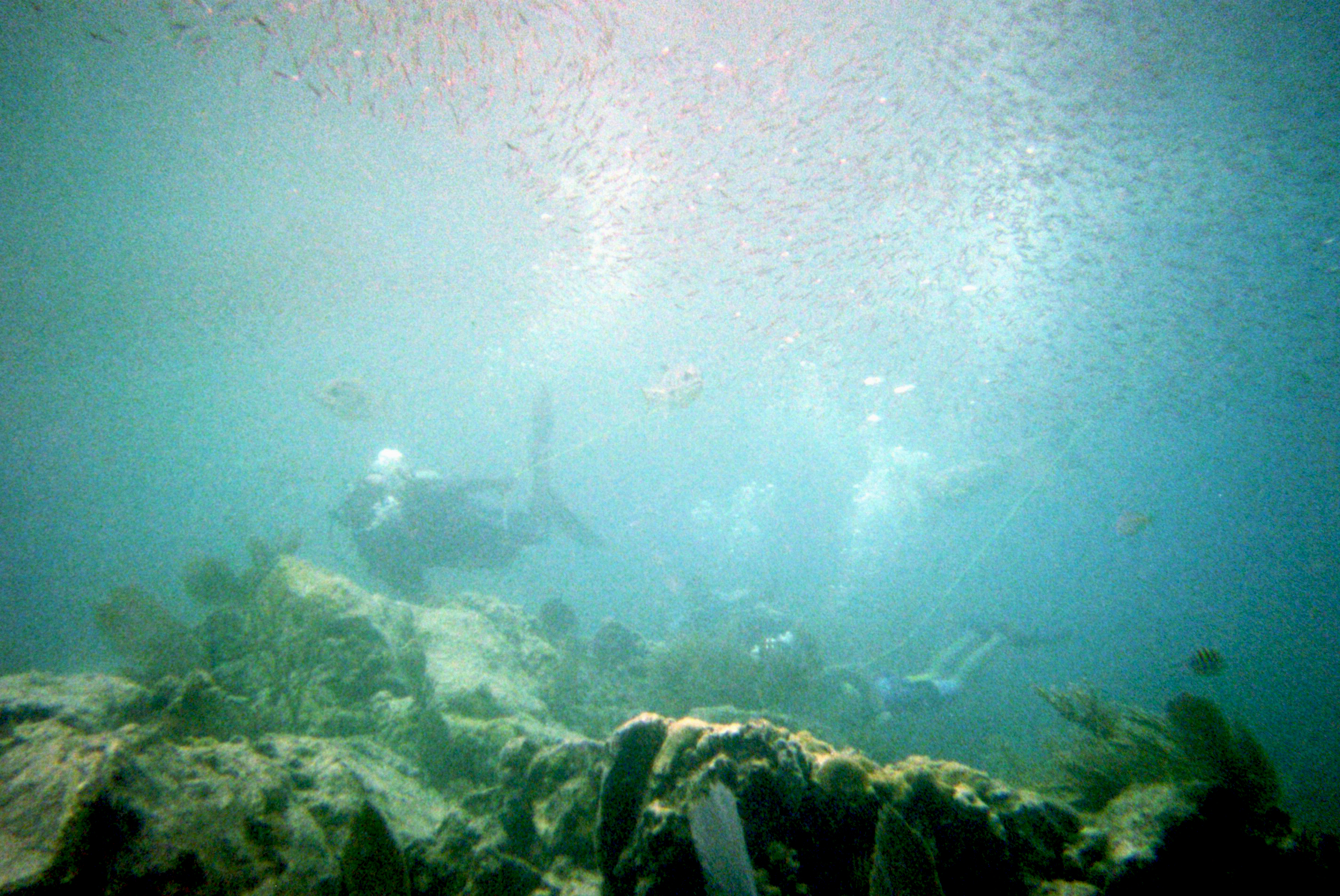 what you can see during sea trekking