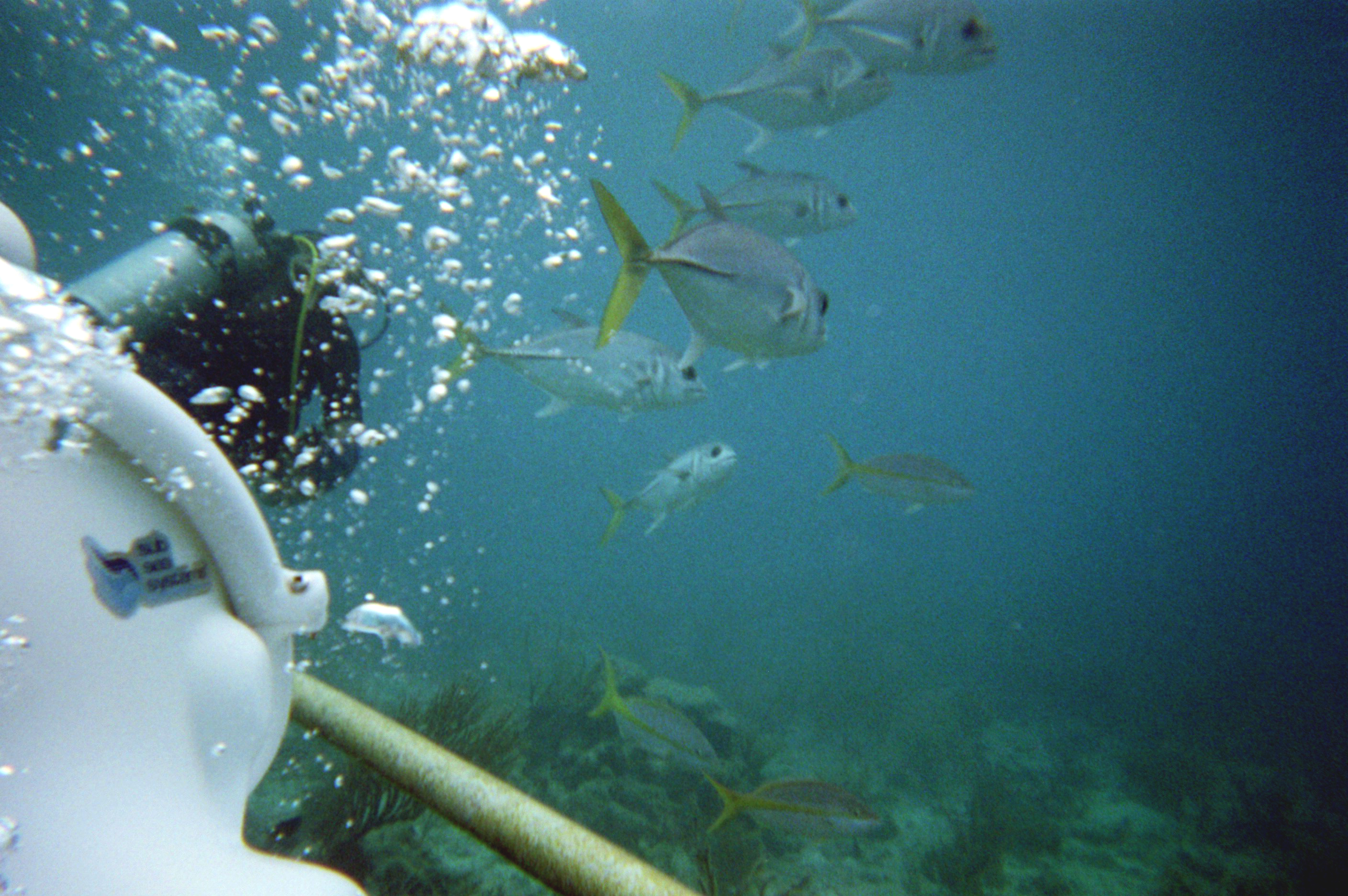 A group of fishes during sea trekking