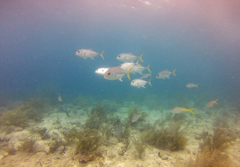 Sea Life in St. Thomas