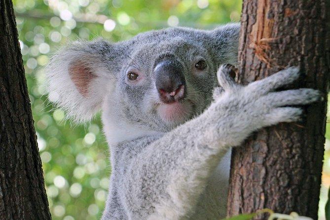 Meet Australian Animals Virtually